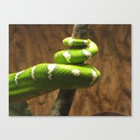 Tight Squeeze Canvas Print
