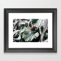 Lady Bugs Caught In Action Framed Art Print