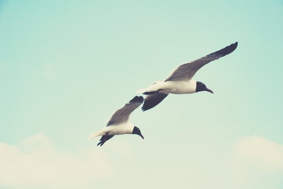 Come fly with me, let's fly, let's fly away Art Print