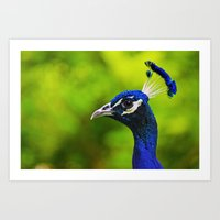 Pretty as a Peacock I Art Print