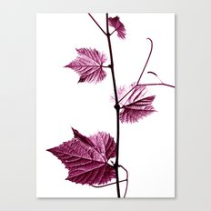 wine leaf abstract I Canvas Print