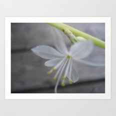 little white one Art Print