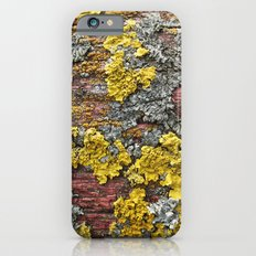 Colorful bark iPhone 6 Slim Case