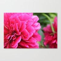 Royal Pink Canvas Print