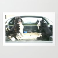 Two Dogs & A Ute Art Print