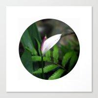 Pink Anthurium Canvas Print