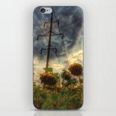 field of faded sunflowers  iPhone & iPod Skin