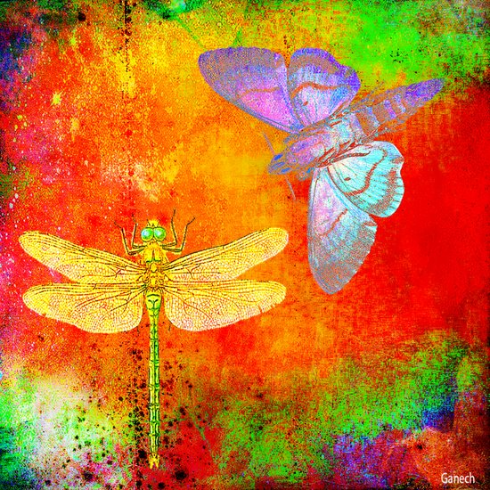The Dragonfly and the Butterfly Canvas Print
