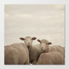 Smiling Sheep  Canvas Print