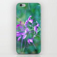 Cleome iPhone & iPod Skin