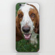 Hound iPhone & iPod Skin