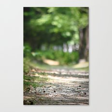 Walking your Path Canvas Print