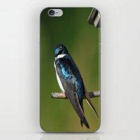 Barn Swallow iPhone & iPod Skin