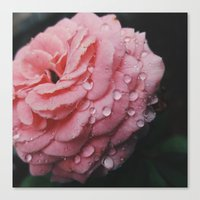 Pink Tears  Canvas Print