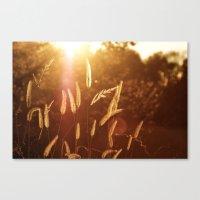 Wild Grass Canvas Print