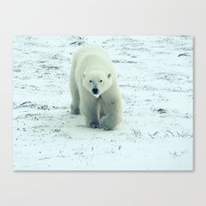 Chilly. Canvas Print