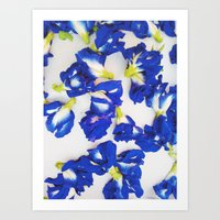 Pea Flower Art Print