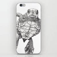 Chelonioidea (the Turtle… iPhone & iPod Skin