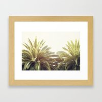 Sunlit Palms Framed Art Print