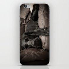 Black Labrador Asleep iPhone & iPod Skin