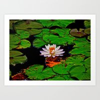 From The Lilypads Art Print