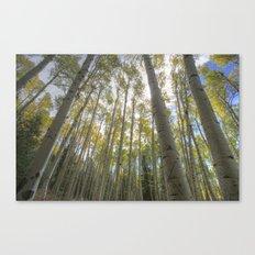 Aspens Canvas Print