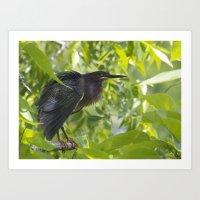 Green Heron 2 Art Print