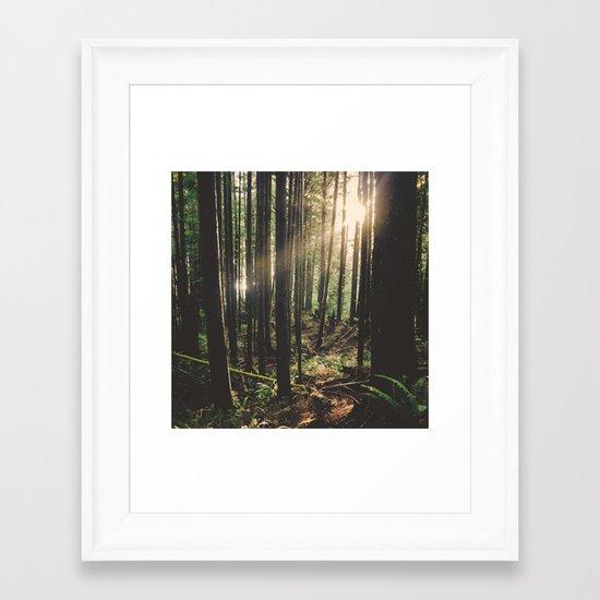 Sun in the Rainforest Framed Art Print