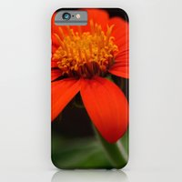 iPhone & iPod Case featuring Red African Daisy by Kama Storie