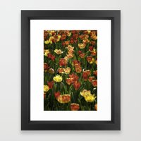 A sea of spring tulips Framed Art Print
