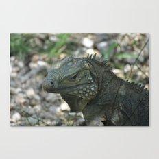 Close Up Iguana Canvas Print