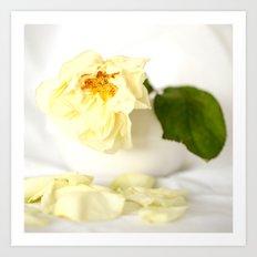 White Vintage Rose  Art Print