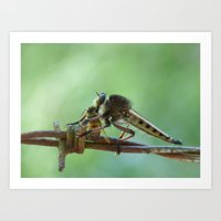 Robber Fly And Bee Art Print