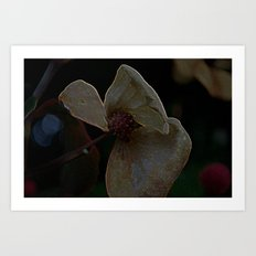 dark dogwood Art Print
