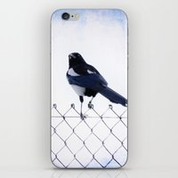 Pie iPhone & iPod Skin