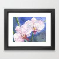 Orchid Gaze Framed Art Print