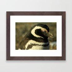Penguin of Magellan Framed Art Print