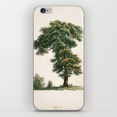 Oak Tree Botanical Illustration iPhone & iPod Skin