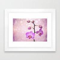 Orchid Tree (textured) Framed Art Print
