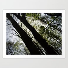 Forest Shadows Art Print