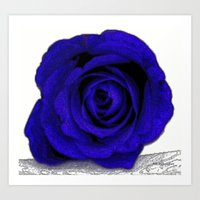 Blue Rose Poster Edges Art Print