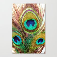 Funky Peacock Feathers Canvas Print