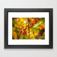 Autumn Drops Framed Art Print