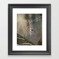 Morning Goldfinch Framed Art Print