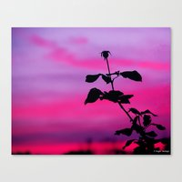 The Sunset Of A Rose Canvas Print