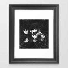 Star of Bethlehem  Framed Art Print