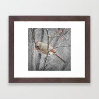 Female Cardinal Framed Art Print