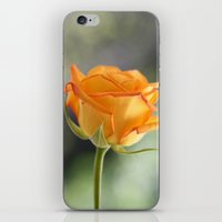 Orange Rose iPhone & iPod Skin