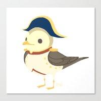 Bonaparte Gull Canvas Print