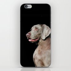 Weimaraner iPhone & iPod Skin